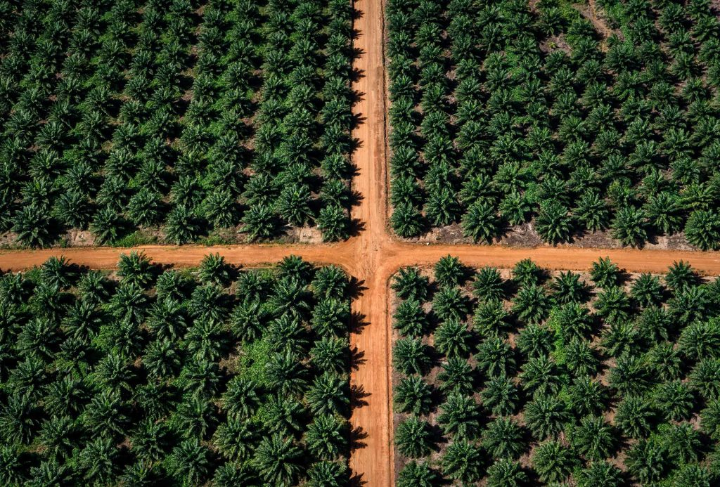 Image result for Palm Oil Plantations