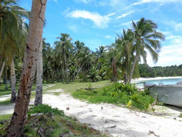 With widespread coconut plantations across Fiji's islands, communities can benefit from multiple income generating activities through the mills. Photo credit: GGGI